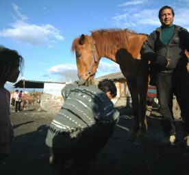 A horse is shod in the Roma neighbourhood of Fakulteta in Sofia, a man stands in front of the horse